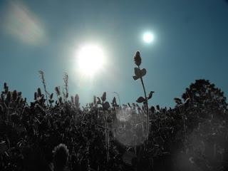 Resultado de imagem para plantas em exoplanetas