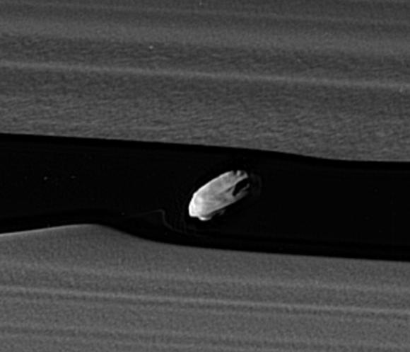 Detalle de Daphnis en el que se aprecia el disco de material en el ecuador (NASA/JPL-Caltech/Space Science Institute).