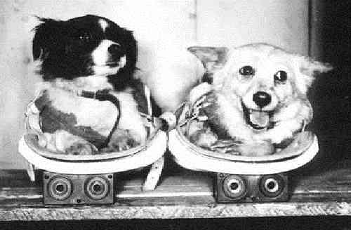Tsigan y Dezik, los primeros animales en ir al espacio y volver vivos.