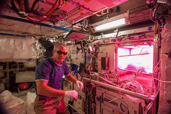 El astronauta Steve Swanson de la Expedición 39 con el experimento Veggie iluminado (NASA).