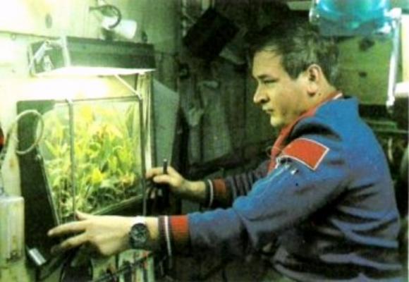 El cosmonauta Yuri Romanenko inspecciona un pequeño invernadero orbital.