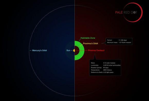 La zona habitable de Próxima comparada con la órbita de Mercurio.