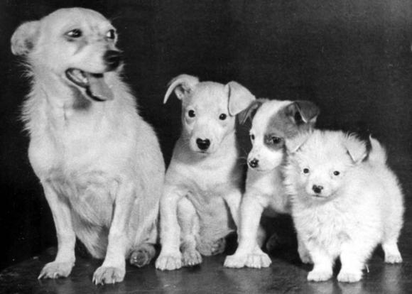 Albina y sus cachorros.